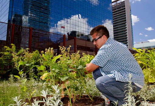 A man planting in an urban garden