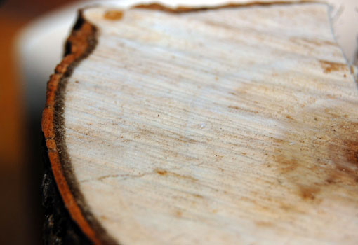 Photo of tree plantation