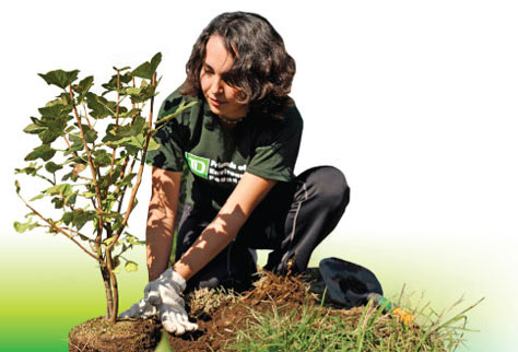 TD Employee planting a tree